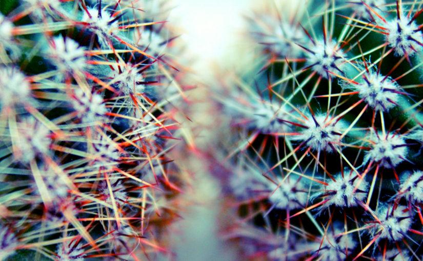 2 kaktusy